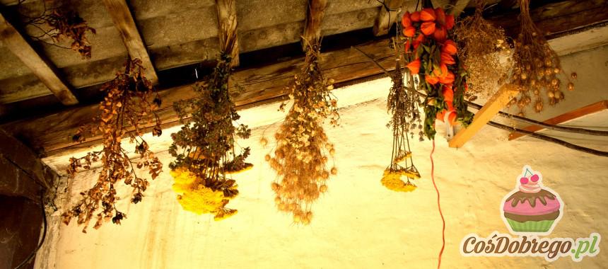 Jak przechowywać zioła? – porada