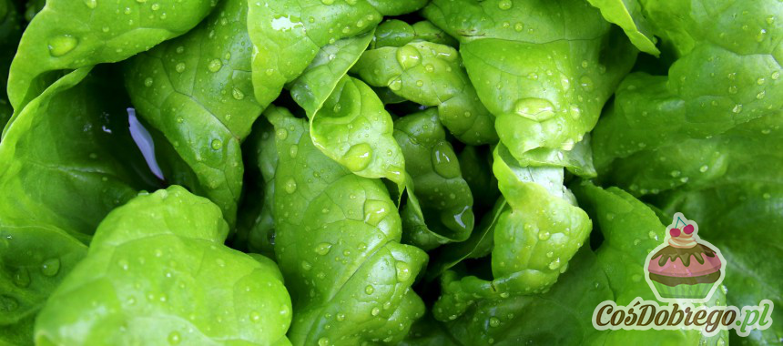 Zwiędłe liście sałaty – jak przywrócić im świeżość? – porada